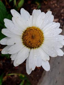 Victorian Language of Flowers